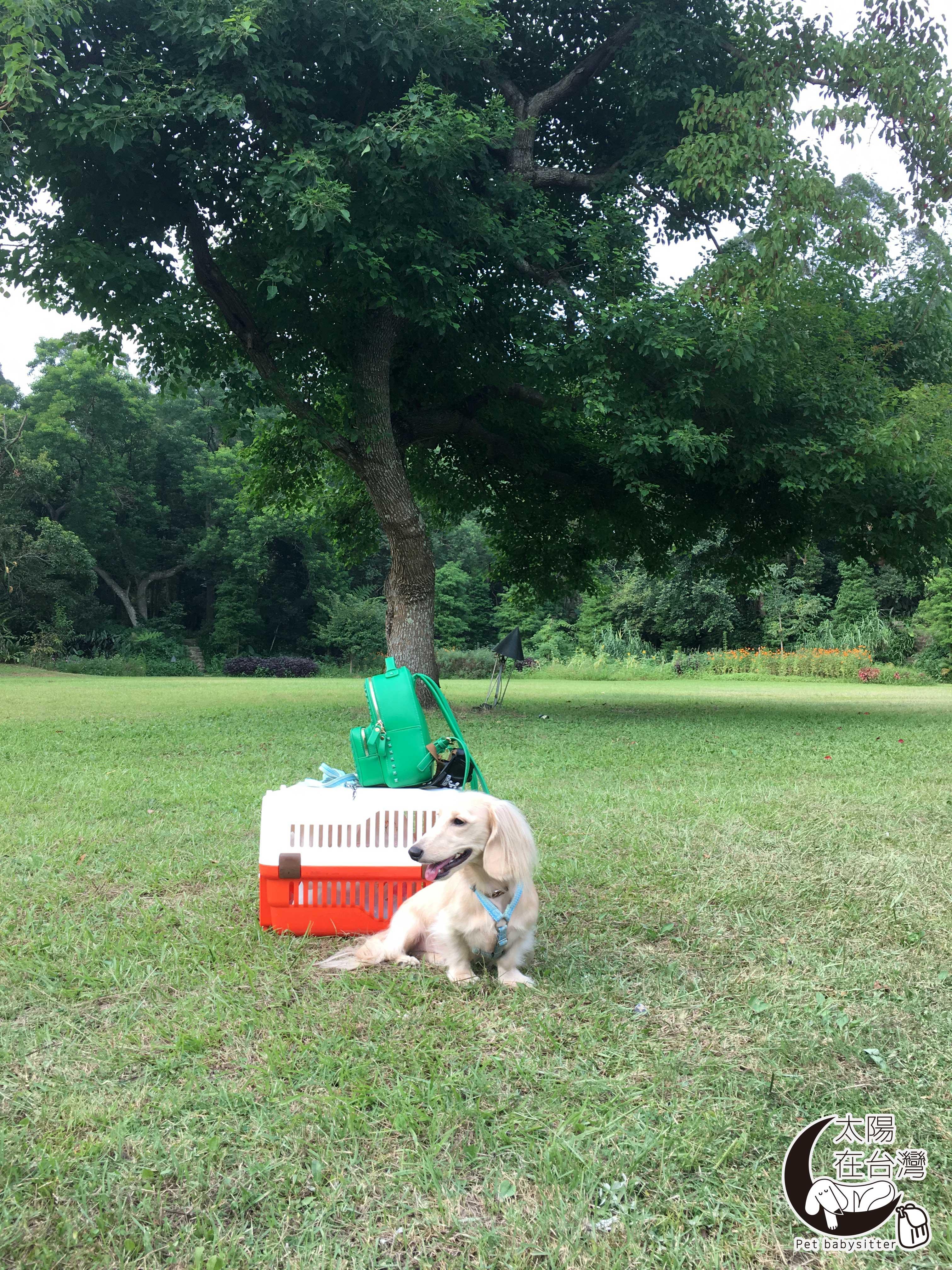 臘腸狗太陽-納美花園