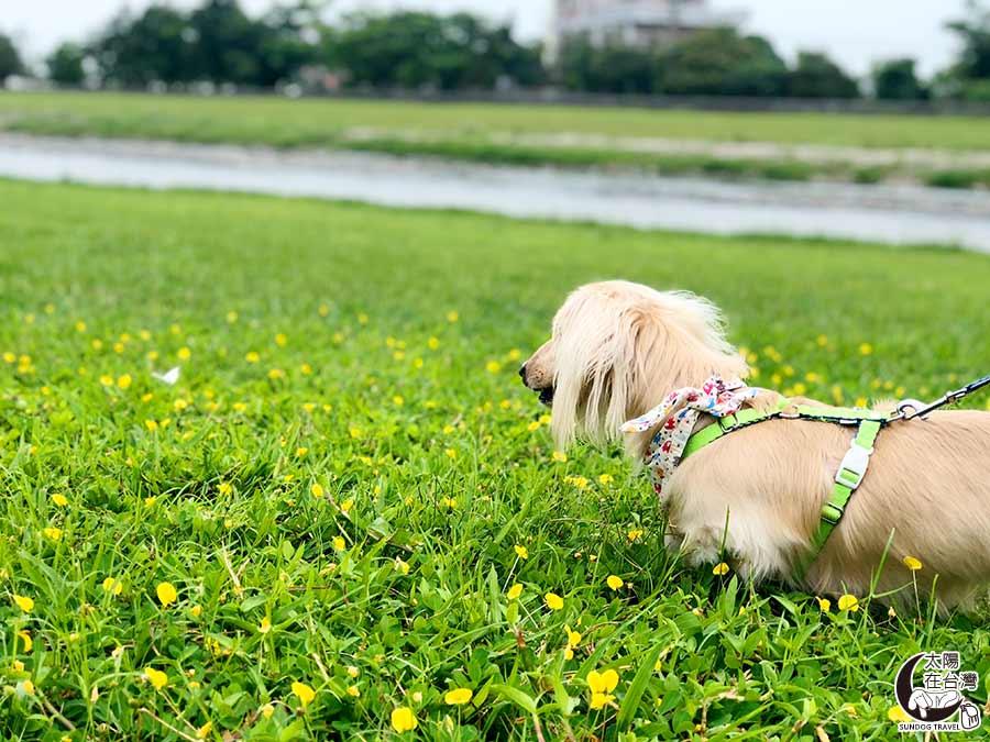 宜蘭寵物旅遊-安農溪