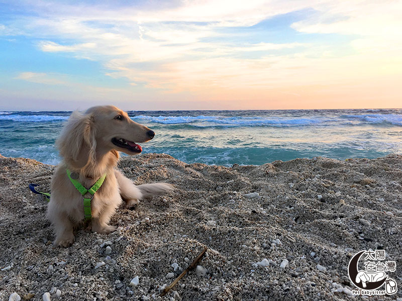 綠島白沙灣-綠島寵物旅遊-太陽在台灣