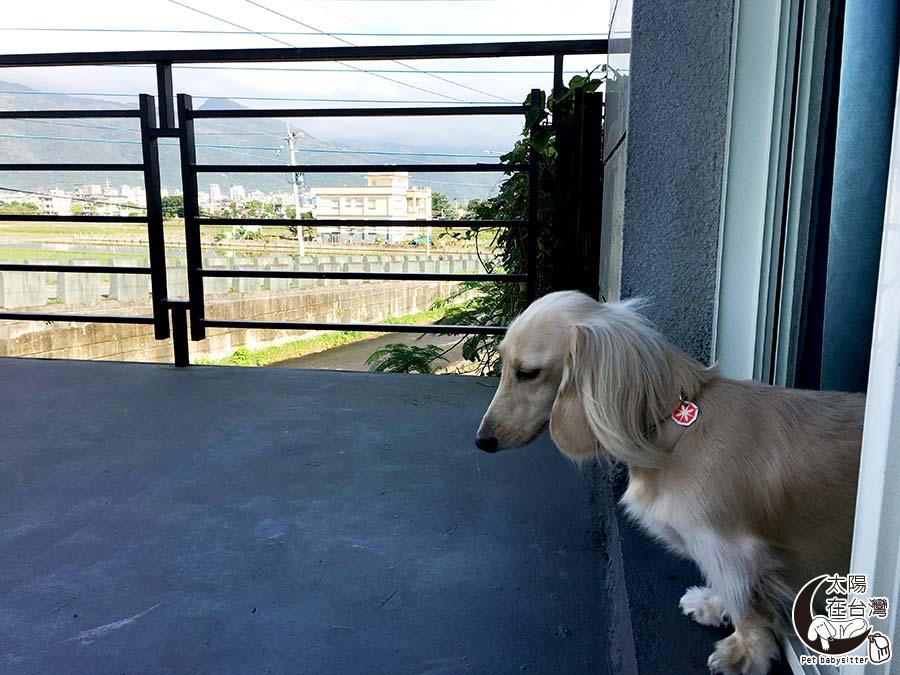 宜蘭寵物民宿-太陽在台灣