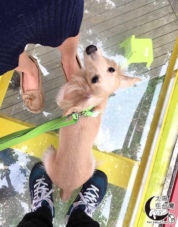 寵物旅遊-宜蘭-曹太陽